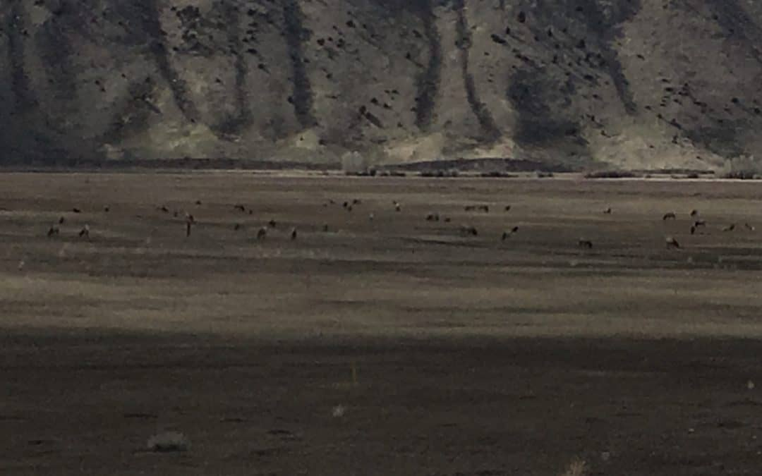 Jackson Hole's Heart: A look into The National Elk Refuge