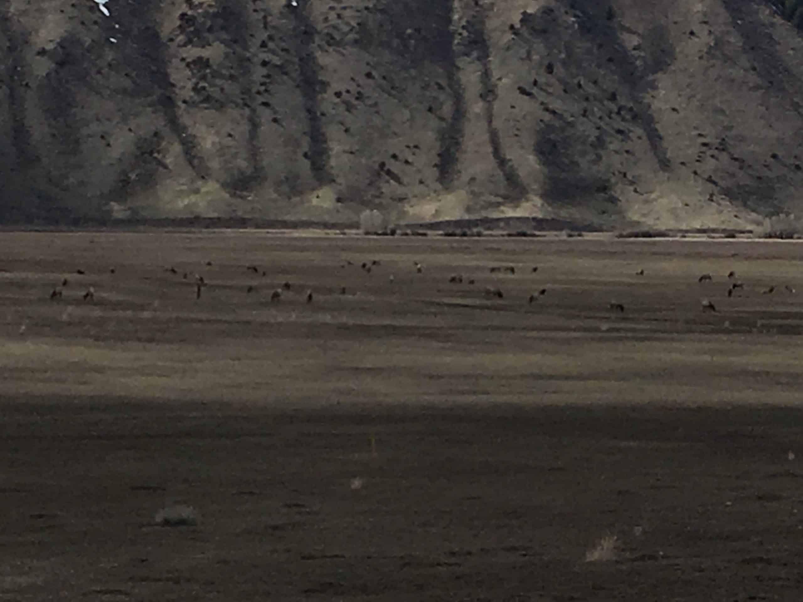 Elk Refuge Jackson Hole WY