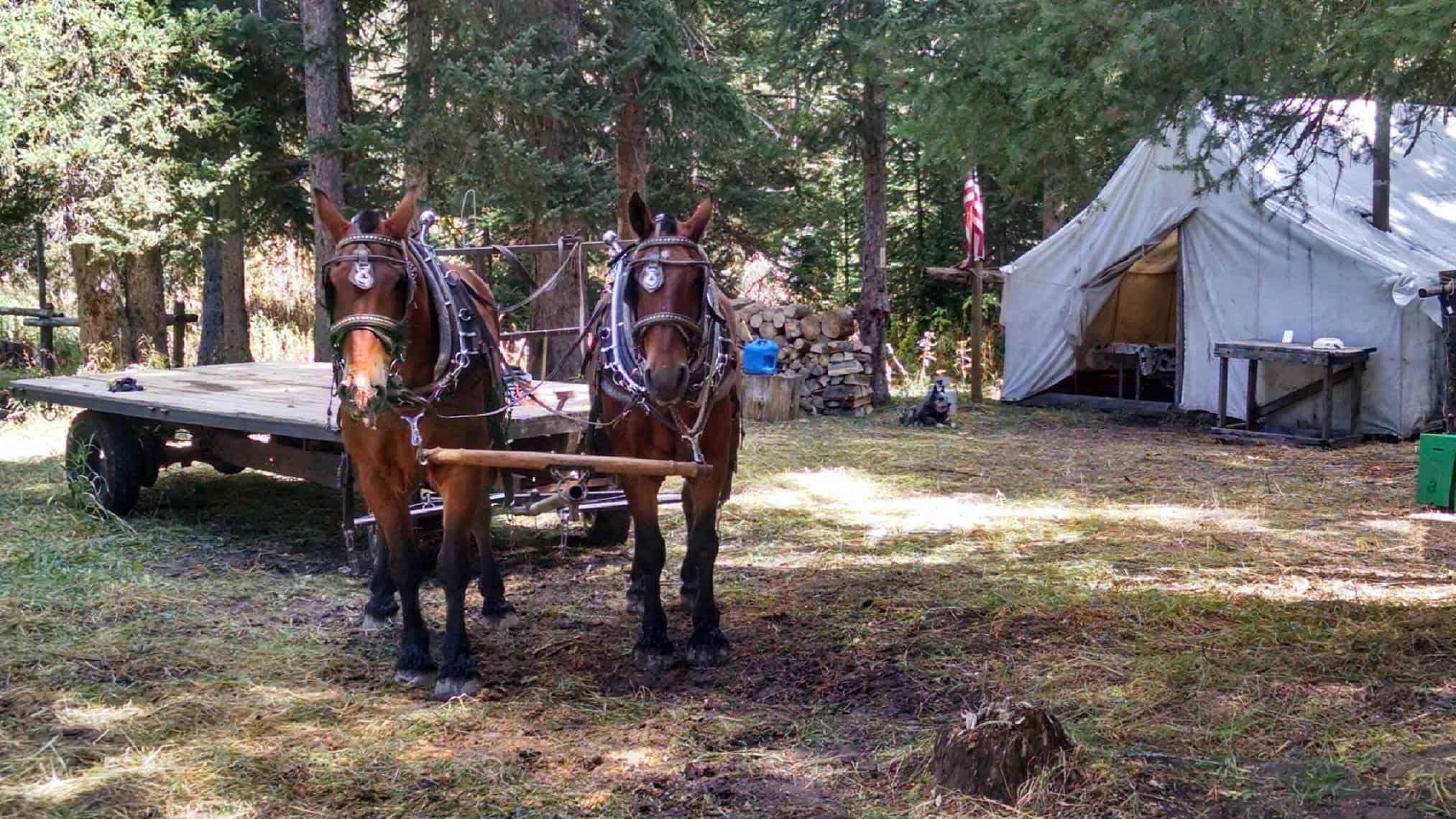 Horses & Equipment