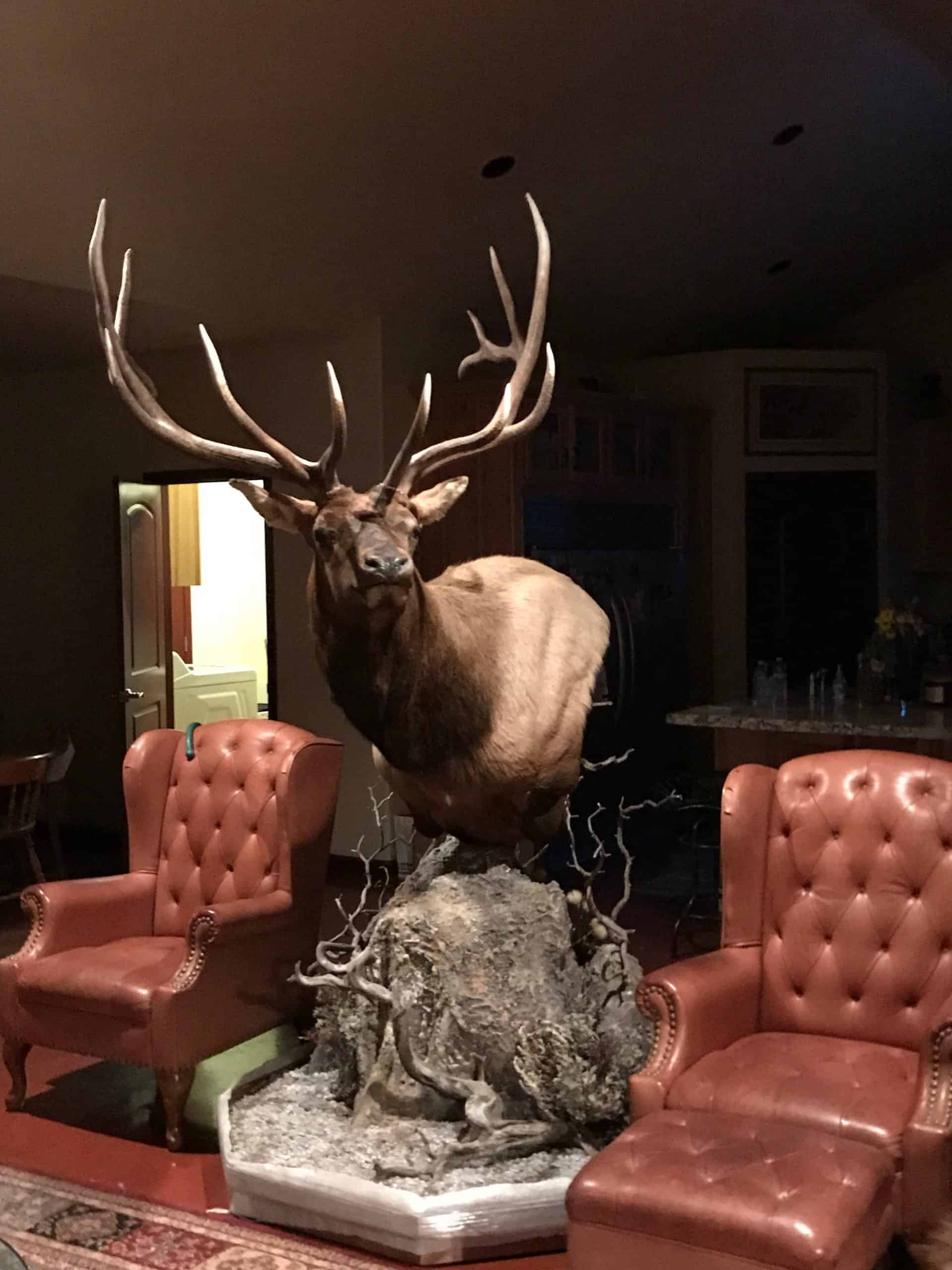 Shoal Creek Outfitters Elk Mount